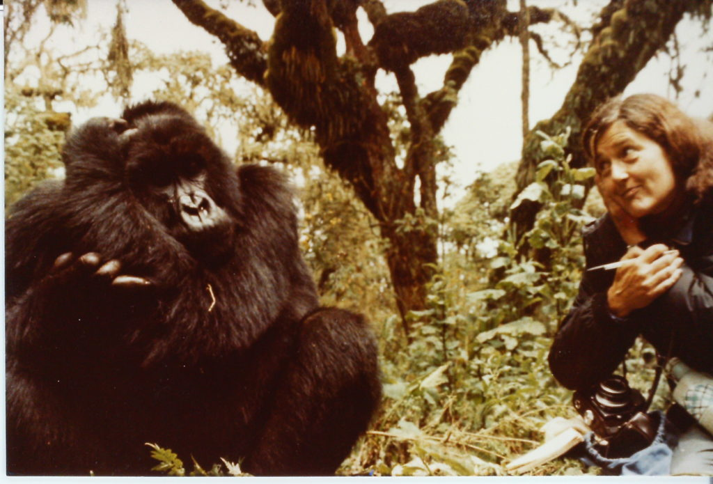 Image result for dian fossey