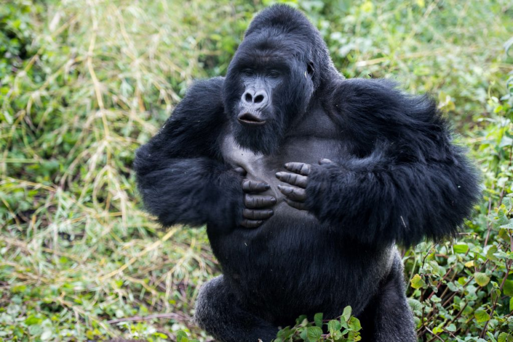 5 Ways to help save gorillas (and other wildlife too ...