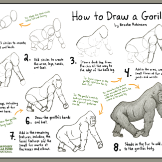 gorilla_draw_tutorial