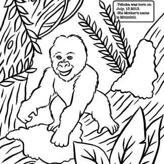 tebuka-coloring-page