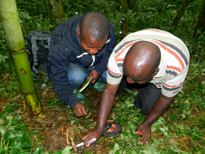 Deo Tuyisingize (right) measures genetic variation in plants