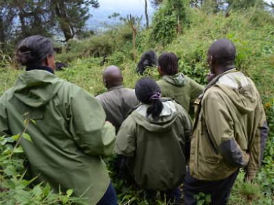 Local leaders on a gorilla trek