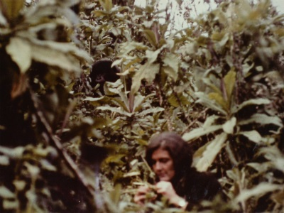 Dian Fossey in the field in Rwanda's Volcanoes National Park
