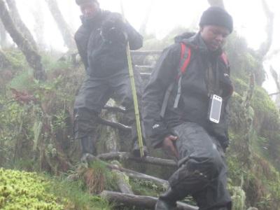 Maurice Ngiramahoro hikes Mt. Sabyinyo during the census.