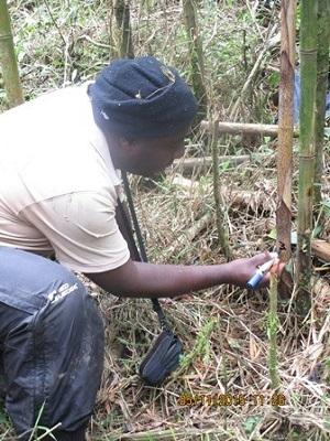Deo marking bamboo