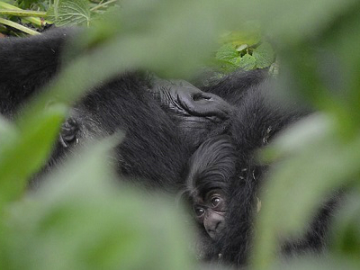 Gutangara infant at one day old