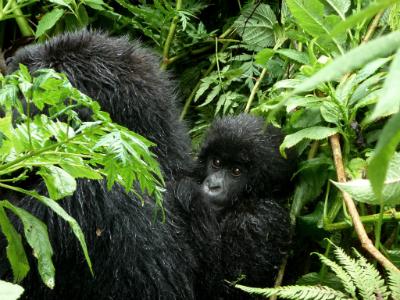 Amatwara on his mother's back