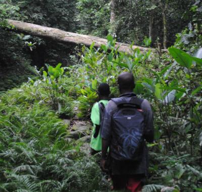 Exploring the Grauer's remote habitat