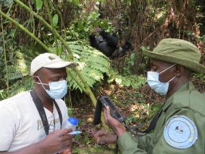 Urbain Ngobobo and Lambert Cirimwami (with handheld device) collect data in Kahuzi-Biega Park