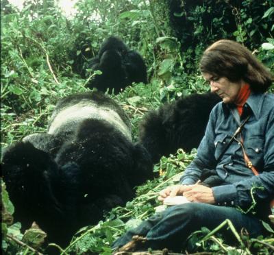 Dr. Dian Fossey observing Digit