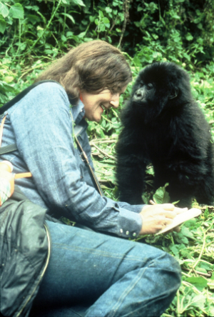 Dr. Dian Fossey with a young gorilla