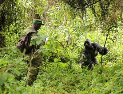 Research Assistant Didier Abavandimwe in the field
