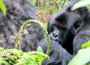 Giraneza grooming Umusatsi