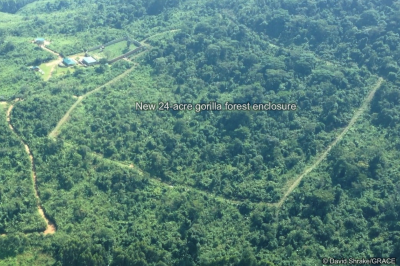 GRACE forest enclosure aerial view