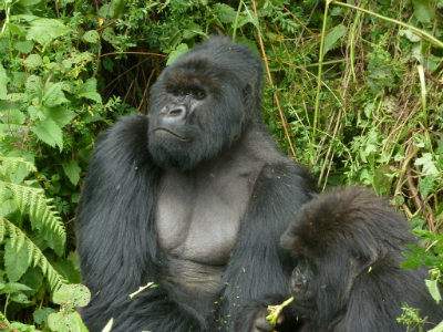 Gushimira with females