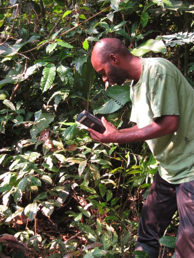 Tracking Grauer's gorillas in Congo