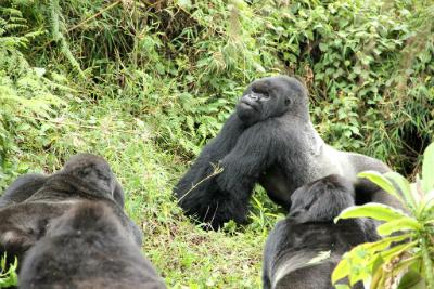 Gushimira in strut stance confronting Ugenda