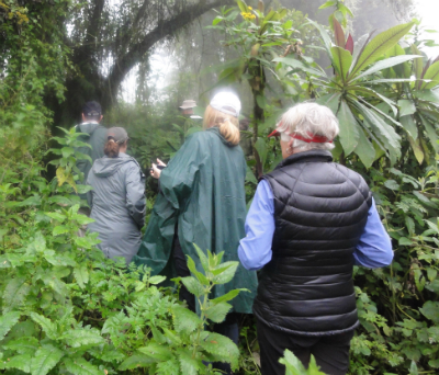 Hiking to visit the gorillas in their forest home