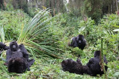 Isabukuru's group