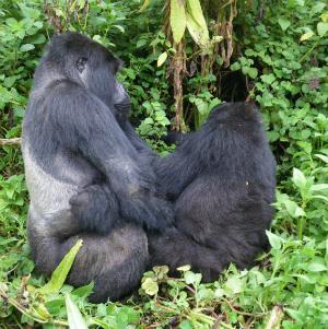 Kirahure and Mahirwe