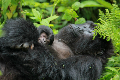 Kubana and her two-day-old infant