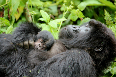 Kubana and her infant