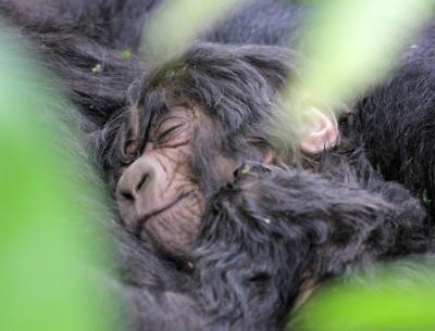 The good news: Kurinda's newborn