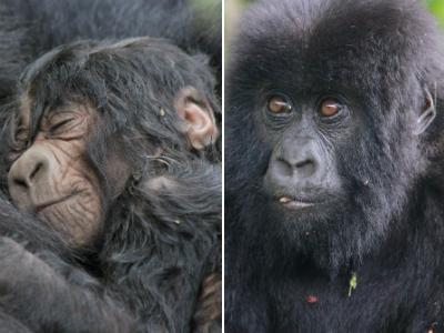 Kurinda infant and Ndizeye