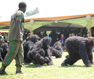 "A Fossey Fund tracker ""monitors"" children dressed as gorillas"