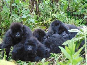 Mafunzo group