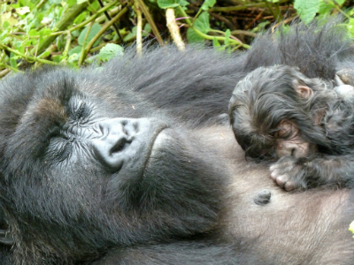 Muganga and the newborn