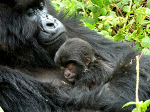Muntu and her infant