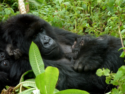Muntu and her infant in April