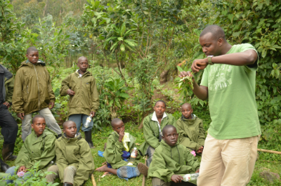 Karama shows how gorillas process one type of food plant