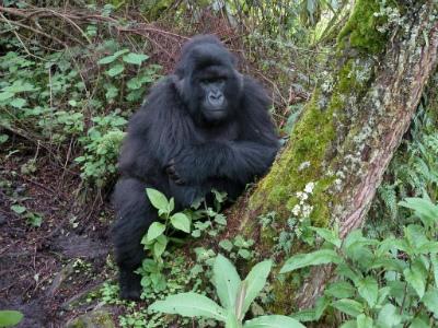 Nyandwi observes Bwenge