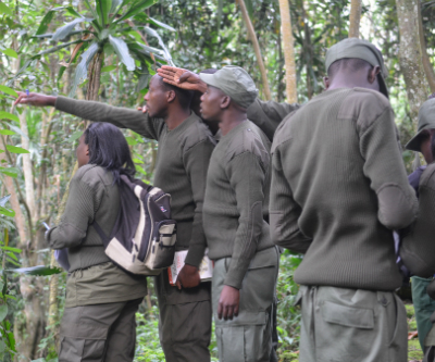 New RDB guides learning bird identification in the field