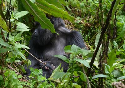 Taraja and her newborn