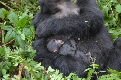 Taraja with newborn