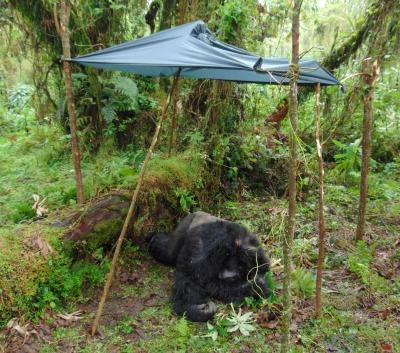 Ugenda under tent wounded