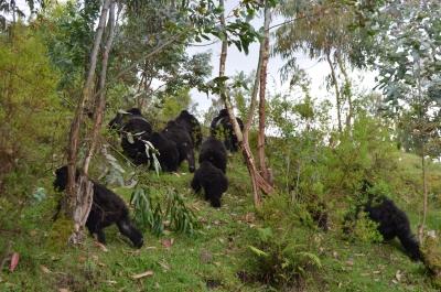 Bwenge merging with Ugenda group