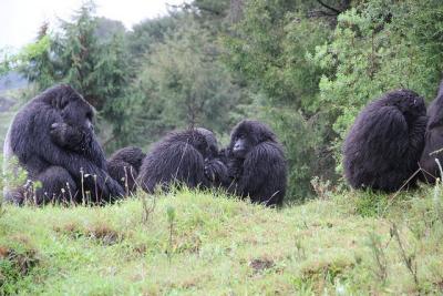 Ugenda group earlier in November