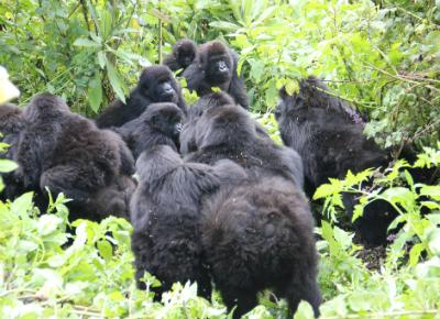 Urugamba's group and Ntambara's group interacting
