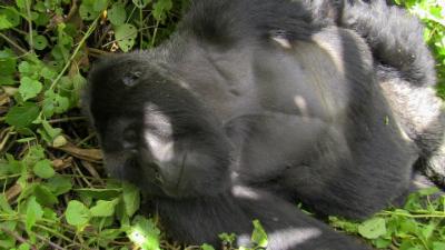 Urugamba, last photographed alive Jan. 24, 2013