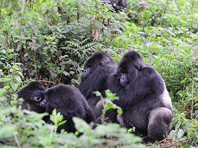 Cantsbee and Gicurasi resting
