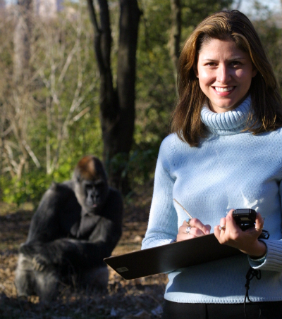 Tara Stoinski, Ph.D., with Ozzie, who at 52 is the oldest captive gorilla in the world and also scored high for extroversion. Photo courtesy of Zoo Atlanta.
