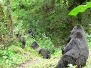 Gwiza appproaches Ntambara's group