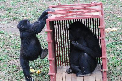 Tumaini and Serufuli find a new toy
