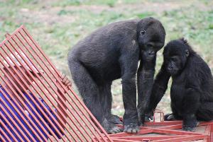 Serufuli and Tumaini on the crate