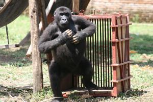 """Ntabwoba: """"My crate!"""""""