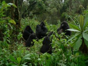 Bwenge's group